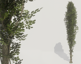 POPLAR TREE - HIGHT TEXTURE LOW-POLY MODEL game-ready