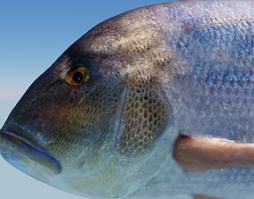 animated Snapper Photorealistic sea fish 3D Model Rigged
