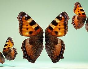 Butterfly 18 3D model