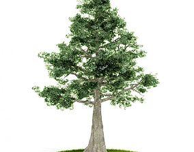 3D model Green Leafy White Tree