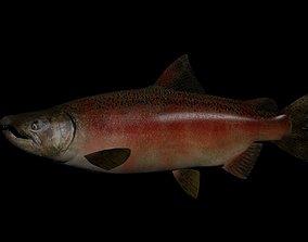 Chinook Salmon 3D model