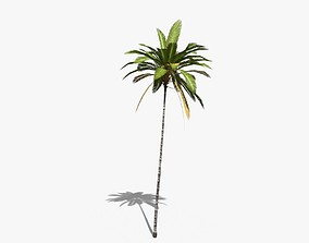 3D model Coconut Palm Tree 19400
