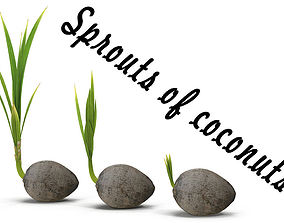 Sprouts of coconuts 3D model