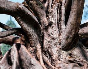 3D model Hero Ficus Fig Tree scanned