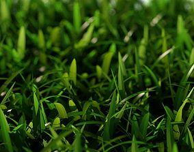 3D Grass Short D