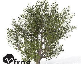 XfrogPlants English Oak 3D model