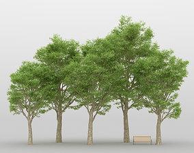 3D model tree Ash Tree Pack 01