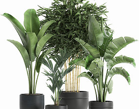 3D Decorative plants for the interior in a black flowerpot