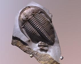 Trilobite fossil 3d scan photogrammetry wrist