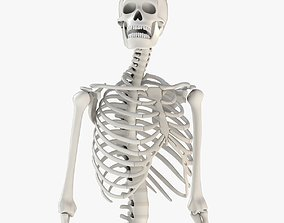 Human Skeleton Model 3d realtime