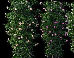 3D model Rose plant set 34