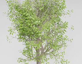 low-poly 3D tree model