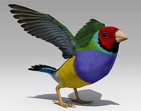 Gouldian Animated 3D asset
