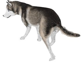 3D model AlaskanMalamute001 Dog