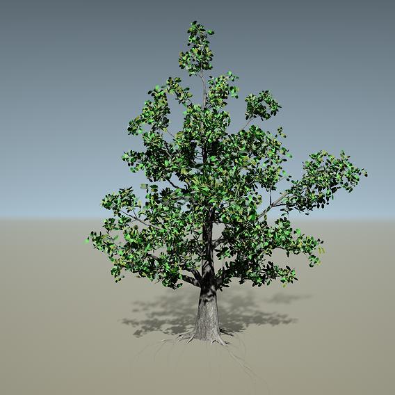 Tree model