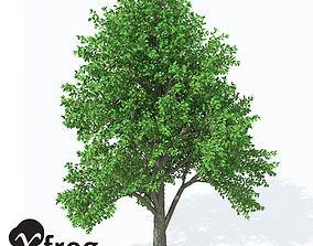 3D model XfrogPlants European White Elm