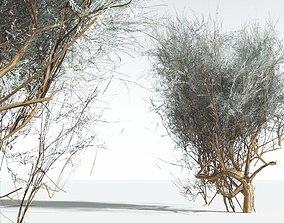 game-ready EVERYPlant Big Sagebrush LowPoly 06 --10