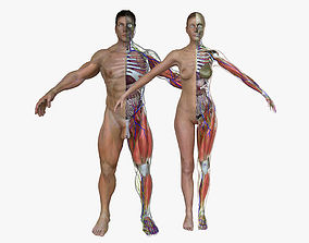 Ultimate Complete Male and Female Anatomy 3DSmax and