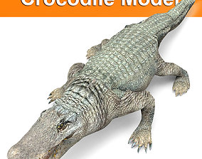 Crocodile 3D Models game ready low poly low-poly