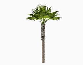 Tall Desert Palm Tree 3D