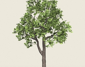 3D model Game Ready Forest Tree 16