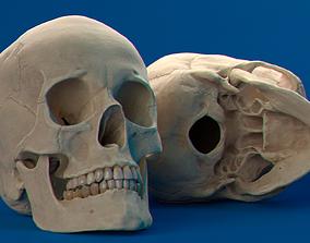 3D Human Female Skull