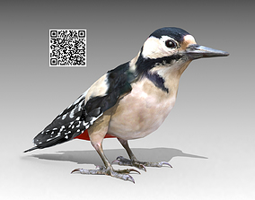 Woodpecker 3D model animated
