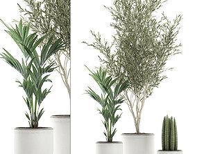 3D model Decorative plants in flowerpots 651
