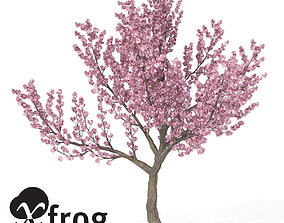 3D XfrogPlants Kanzan Cherry 1