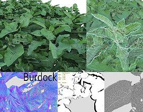 3D model Burdock big leaves