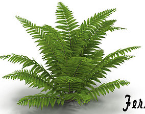 Fern 3D model bushes