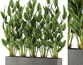 3D Plants collection 474