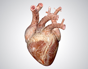 Heart No Blood Rigged Animated PBR 3D asset game-ready