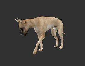 ANML-024 Dog Animated 3D model animals