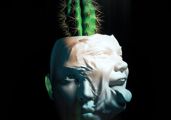 Persona Cactus