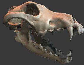 3D model Wolf Skull