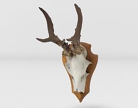 Deerhead 001 3D