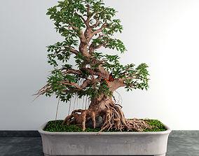 bonsai plant pot 3D model