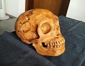 3D print model Neanderthaler Skull