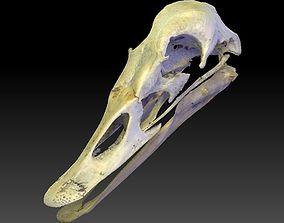 Duck Skull Scan 3D model