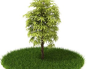 3D model Green Tree