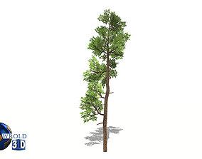 game-ready Cedar tree lowpoly 3d model