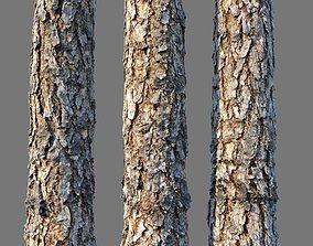 bark Pine wood 8k seamless material 3D model