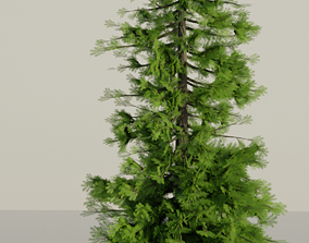 conifer Fir Tree 3D model PBR