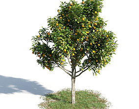 3D model Citrus sinensys 14 am154