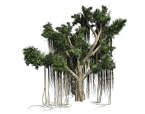3D Chinese Banyan Tree