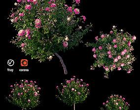 Plant rose set 05 3D model