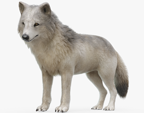 Grey Wolf Rigged with Fur 3D model