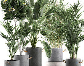 Plants in pots of concrete for the interior 596 3D