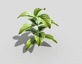 plant 3D model low-poly Low poly Plant